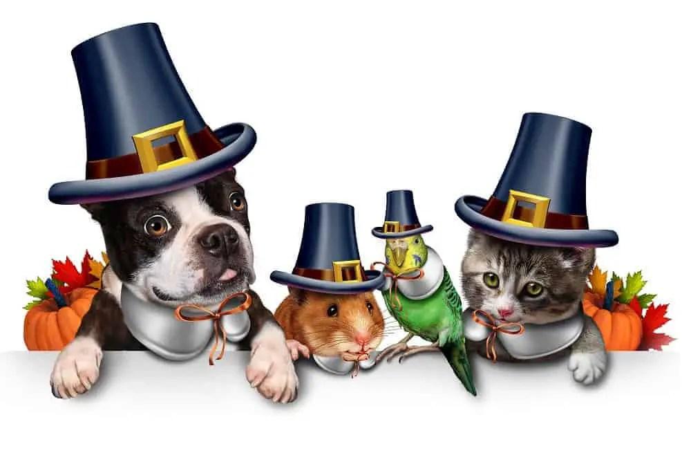 pets thanksgiving
