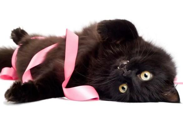 black cat with ribbon