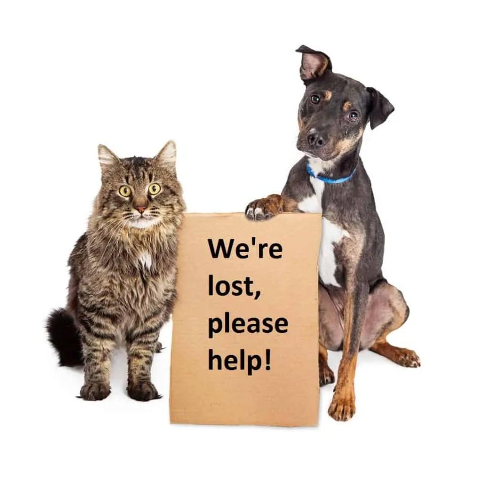 lost pets