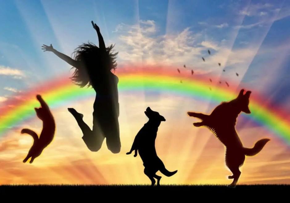 do pets go to heaven