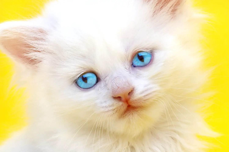 cats esp