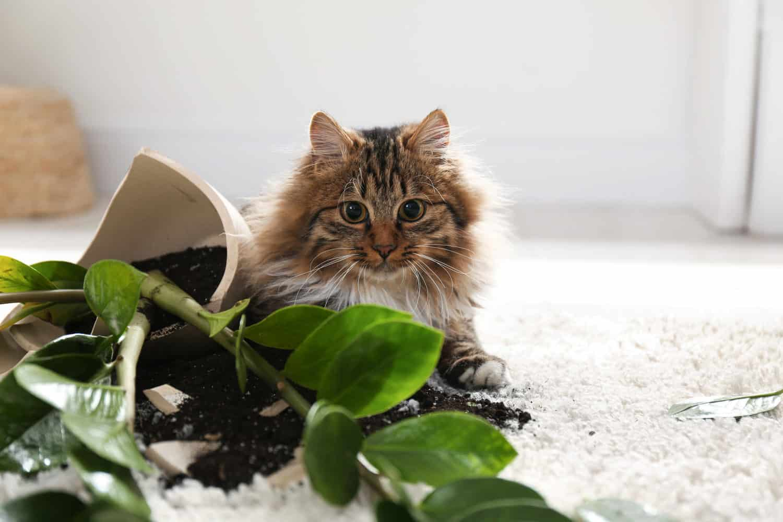 cat gravity experiments