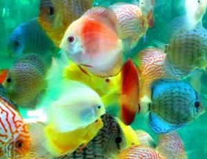 content marketing fish hooks
