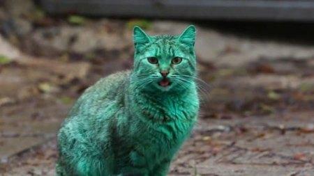 green-cat1