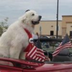Dog Elected Mayor Of Town,Again!!!