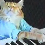 The Curious History Of Beloved Internet Sensation 'Keyboard Cat'