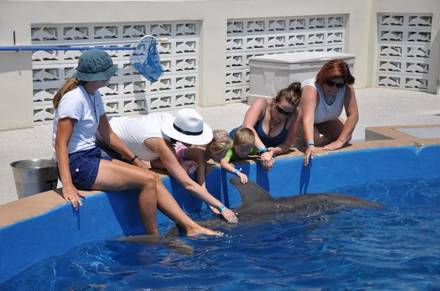 Amy West and daughter touching dolphin at Marinteland