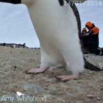 Photobombing penguin!