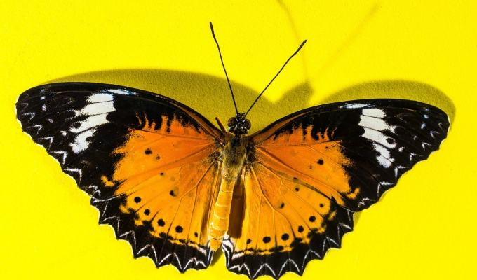 How a Quiet Market Analyst Morphed Into a Social Marketing Butterfly