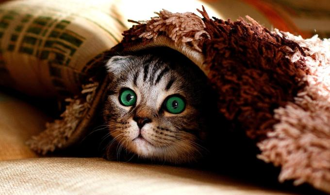 Cat hiding under rug to illustrate lurking content insights.