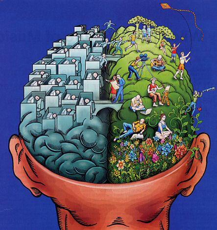Left, Right or Both? Brain Development Explained