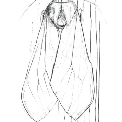 The Moth | Graphite pencil on paper | 21 x 29 cm | 2019