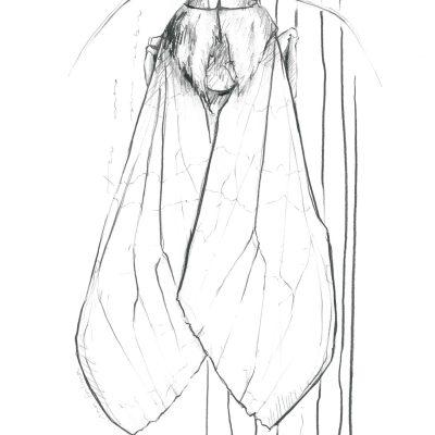 The Moth   Graphite pencil on paper   21 x 29 cm   2019