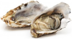 oysters and testosterone production