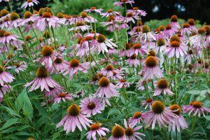 Gardening and ADHD?