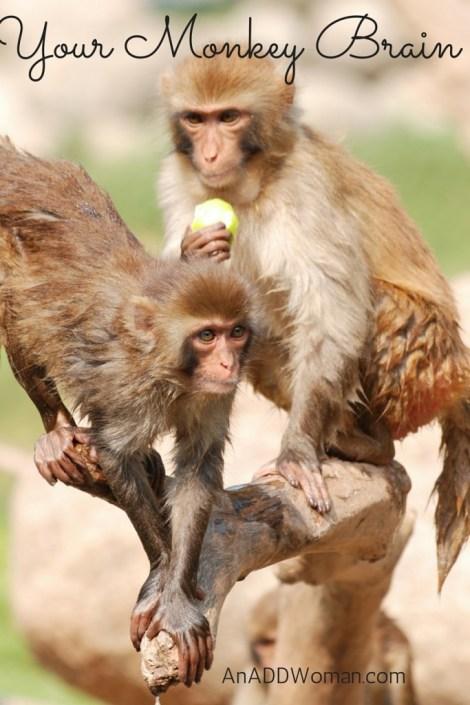Your Monkey Brain