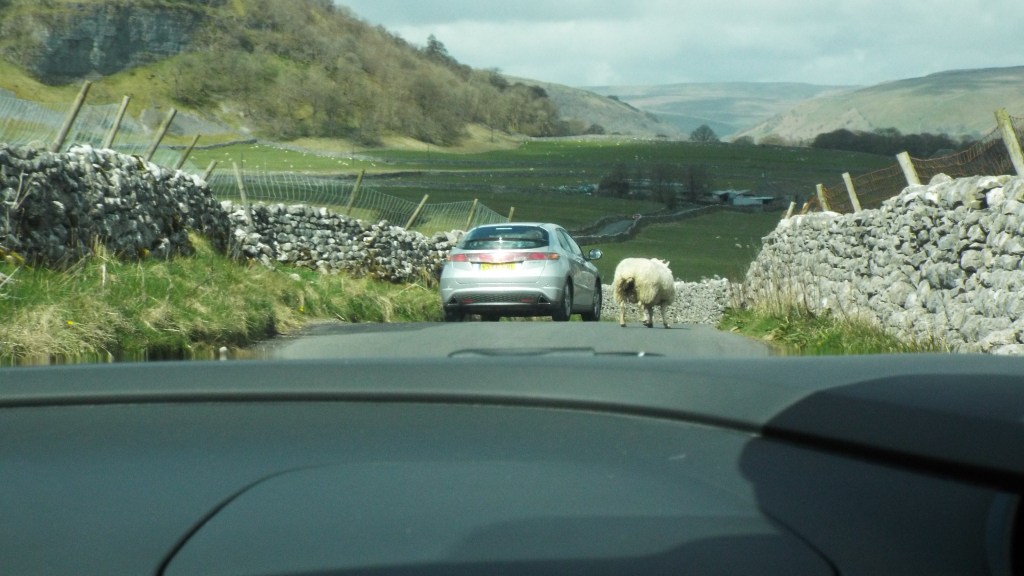 Sheep protesters were a bit of a nuisance