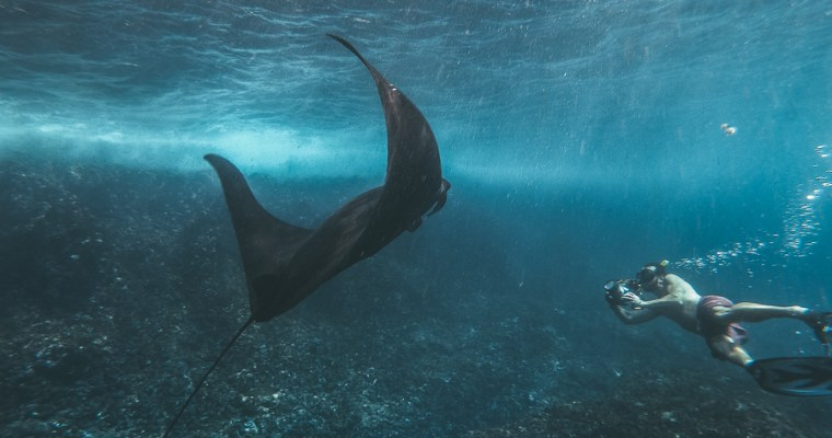 Snorkeling with Giant Manta Rays in Bali