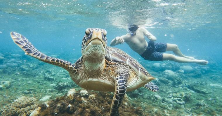 Snorkeling with Sea Turtles- Dumaguete to Apo Island