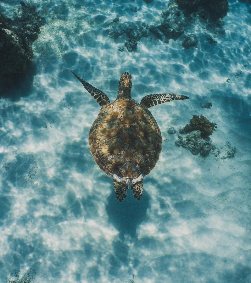 island hopping bohol balicasag island virgin island