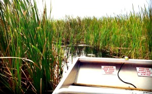 Airboat Ride In Kissimmee An Adventurer S Life For Me