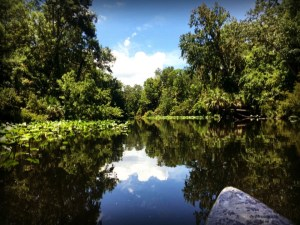 Reflections on the Wekiva River
