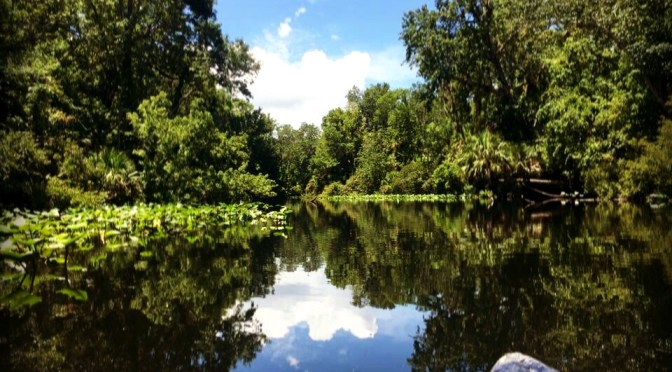 Canoeing Wekiva Island