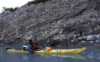 Andrew Wulfers checks out the Black Legged Kittywake rookery in Shoup Bay