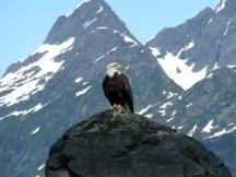 sawmill_eagle_rock