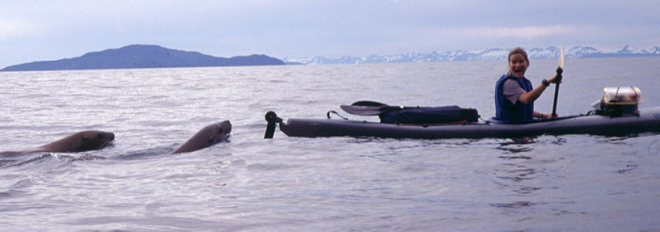 seals_after_kayaker_800