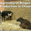 China Dry Animal Dung fuel agricultural biogas