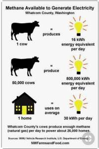 Image is an infographic to answer: How many cows make how much power?