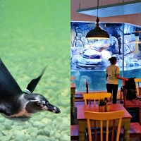 PINGOO RESTAURANT BY JAKARTA AQUARIUM - NEO SOHO MALL, Jakarta