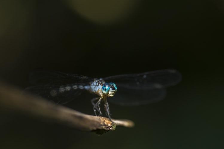 PENTING! – Hukum Membunuh Nyamuk Dengan Raket Listrik
