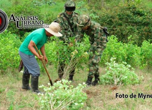 Seis soldados que erradicaban coca resultaron heridos tras detonación de artefacto en Tarazá, Antioquia