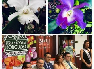 Columna Bitácora Política] Coatepec de las Orquídeas