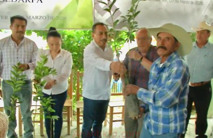 Excelente apoyo a productores de limón persa: Diputado Antonio García
