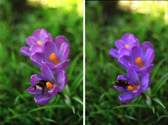 Canon EOS 50E, analoog, analoge camera, canon, lomography 800, analoge kiekjes, save the bees