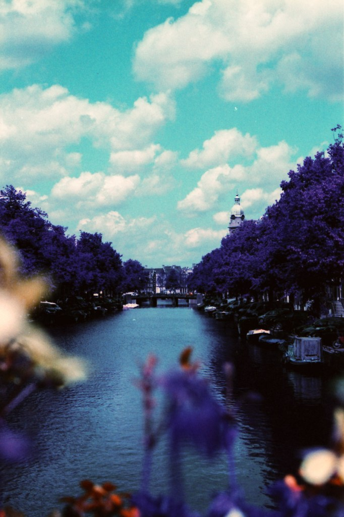 Lomochrome Purple, 35mm film photography, flowers on film, Amsterdam