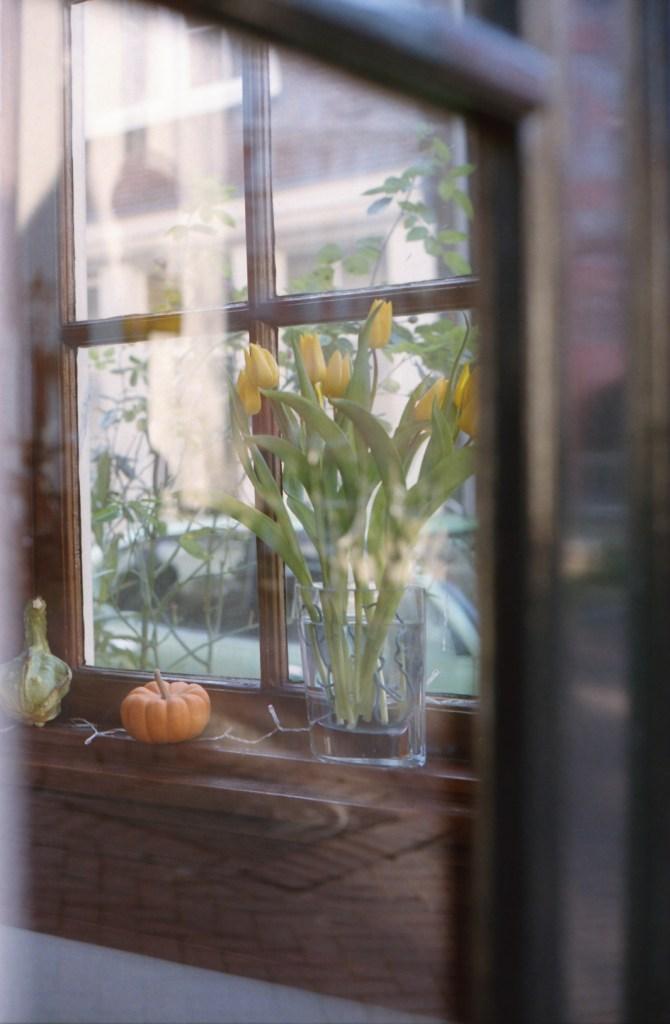 Gele tulpen, Nederlandse tulpen, Amsterdam, tulpen achter raam