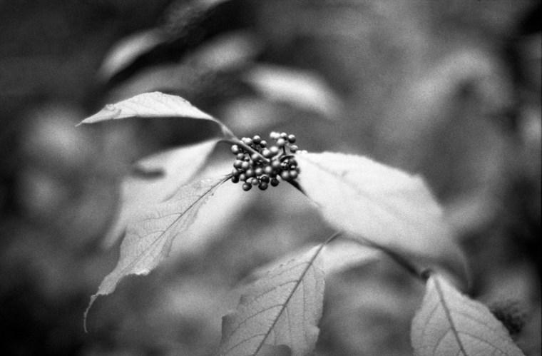 analogue addicted, analoge fotografie hamburg, schwarz-weiß, lomo, herbst, kodak