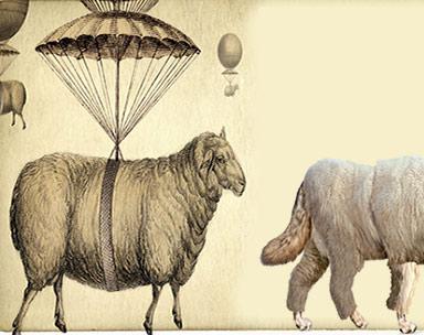 ΕΙΚΟΝΑ---Πρόβατα,-Ελλάδα-Εξ.