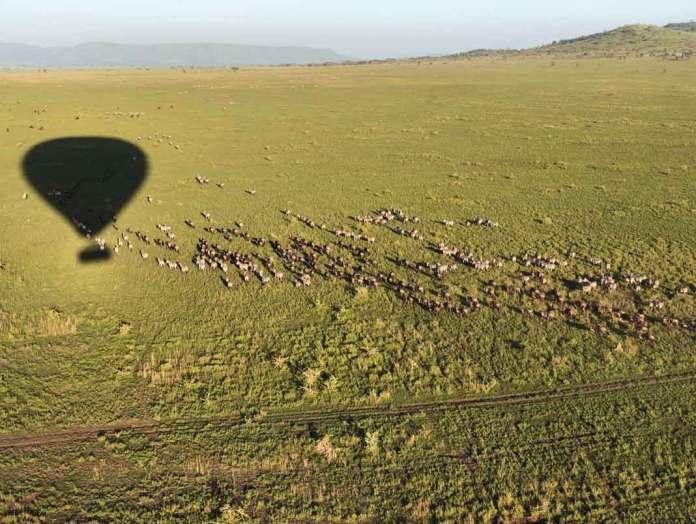 """Volando sobre Serengeti. Sintiéndome fotógrafa de National Geographic"", dijo Marielena"