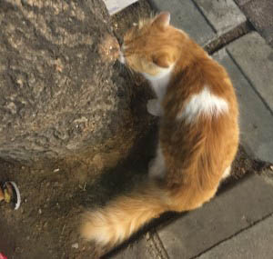 anamariapopa.com blog post turcia turkey istanbul stray cat 3
