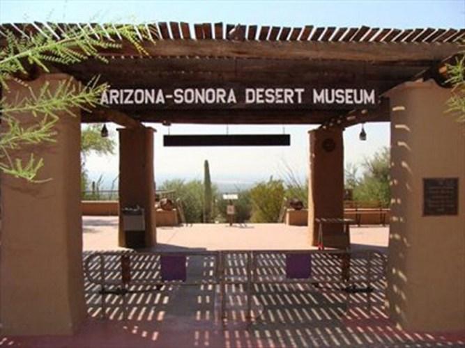Arizona Reprised: The Desert Museum (Part 1)