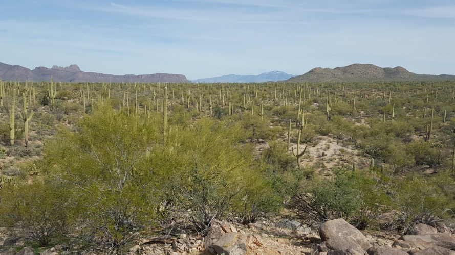 Ajo, Sonoran Desert, and The Border Patrol