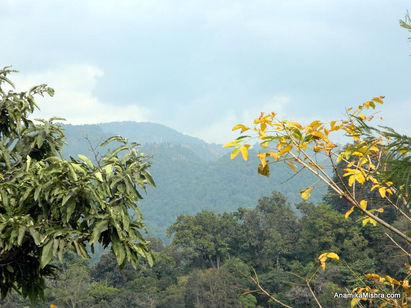 Short Escape To Pangot, Uttarakhand + Reasons To Visit