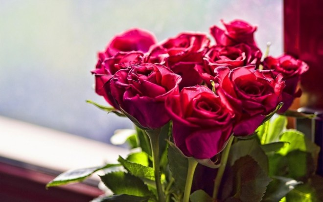 Rose Flower Meanings Based On Color + 15+ Beautiful Rose Photos