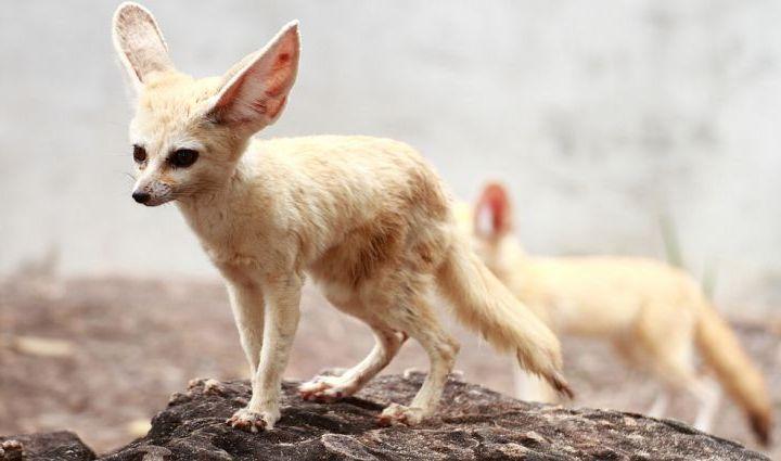 ما هي الحيوانات التي تعيش في المغرب