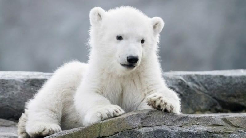 أقدم 10 حدائق حيوانات في العالم